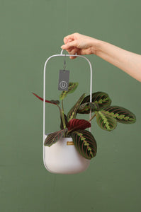 Hanging Planter in Grey with 2 arms by Hübsch