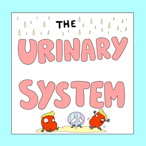 Urinary System Resources