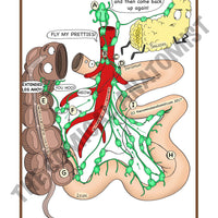 A5 Color Digestive System with a White Background JPEG Bundle