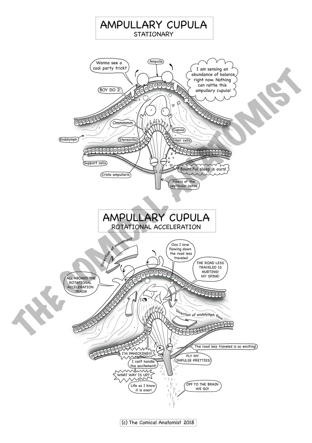 Ampullary Cupula Coloring & Activity Page