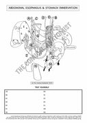 Stomach & Abdominal Esophagus Innervation Coloring & Activity Page