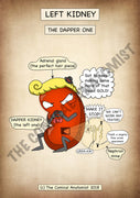 Dapper Kidney A4 Printable Poster
