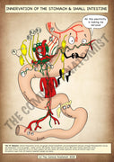 Small Intestine & Stomach Innervation A4 Printable Poster