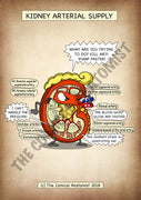 Kidney Arterial Supply A4 Printable Poster