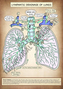 Lung Lymphatics A4 High Resolution PDF Digital Download