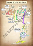 Nephron A4 High Resolution PDF Digital Download