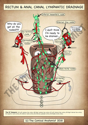 Rectum & Anal Canal Lymphatic Drainage A4 High Resolution PDF Digital Download