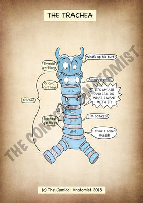Trachea A4 High Resolution PDF Digital Download