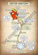 Ureter A4 Printable Poster