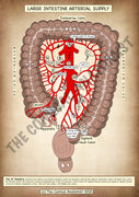 Large Intestine Arterial Supply A4 High Resolution PDF Digital Download