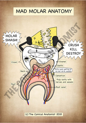 Molar A4 High Resolution PDF Digital Download