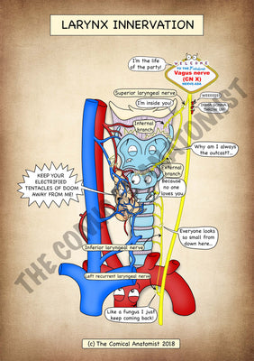 Larynx Innervation A4 High Resolution PDF Digital Download