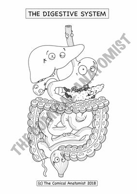 A4 Complete Digestive System Coloring & Activity Pages E-book