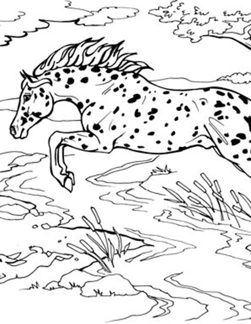 Free Horse Coloring Pages | Horse coloring pages, Horse coloring ... | 647x500