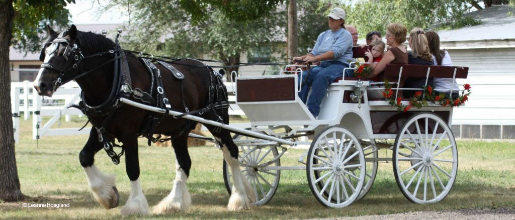 Shire pulling cart