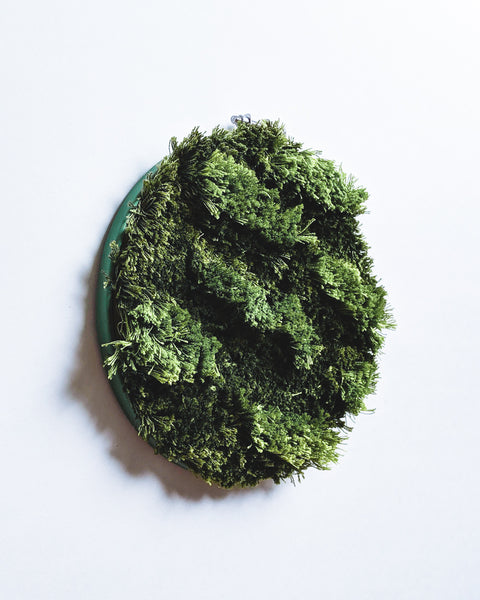 Moss Study no. 1 Original Art - 6 in. hoop