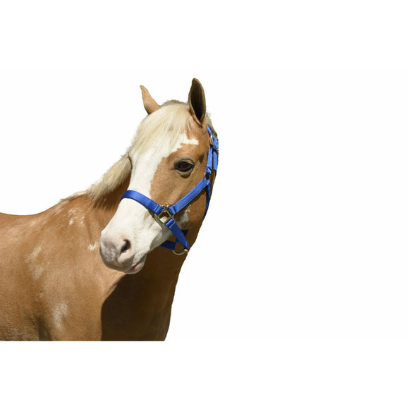 Intrepid Nylon Non-Adjustable Halter