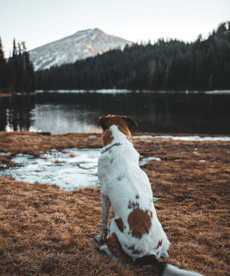 Camping With Your Dog 101 | Duluth Pack