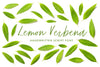 Lemon Verbena Handwritten Font