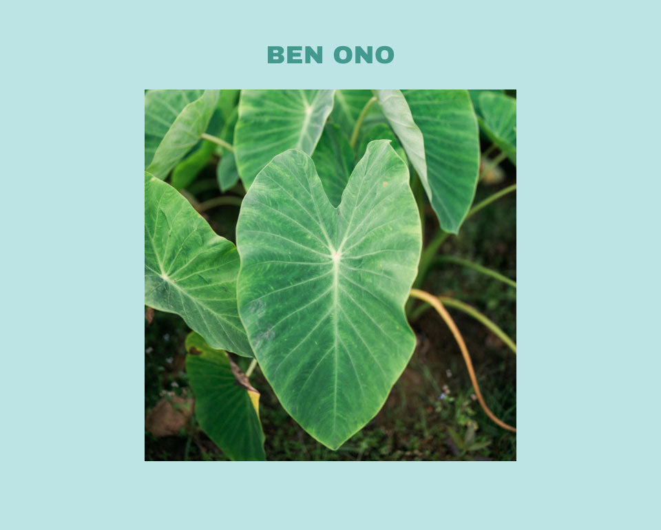 Ben Ono Olukai influencer photo 9