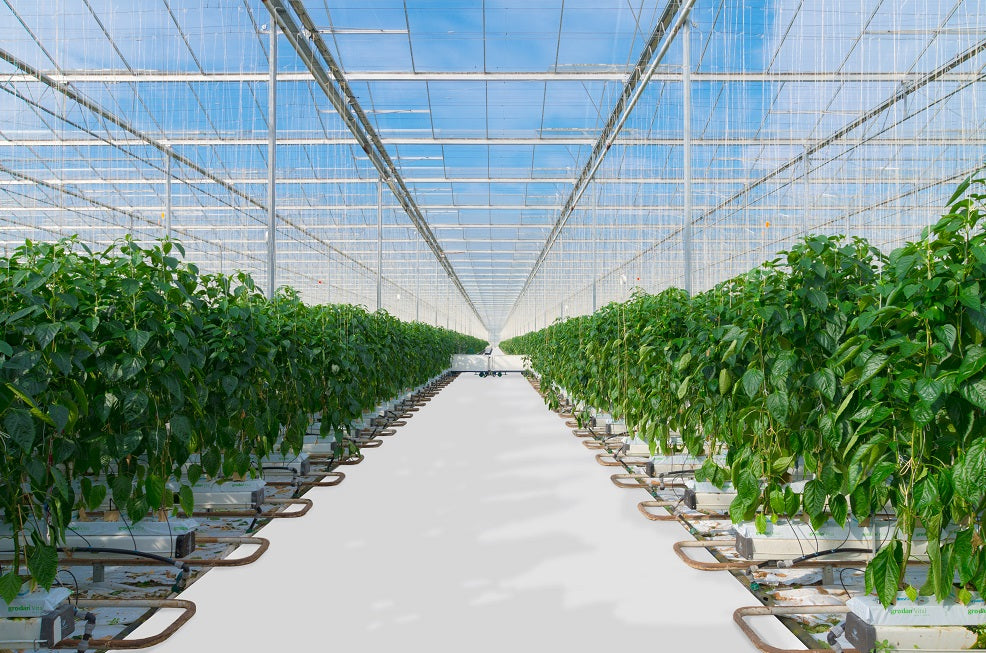 </p><br>New Technologies Enhance Production in Large Grow Facilities