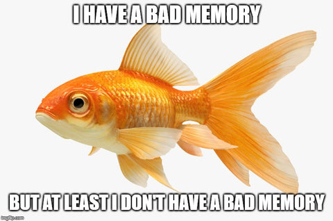 gold fish short term memory problems