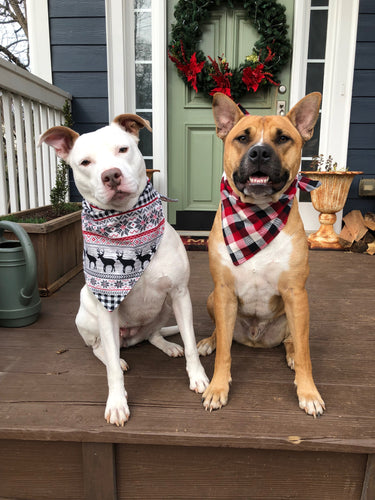 Holiday Bandanas