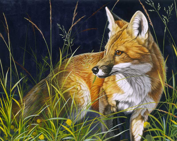 Paint By Numbers - Young Red Fox