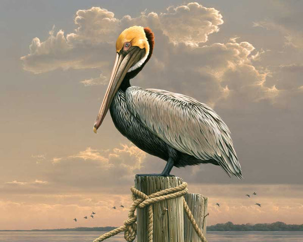 Paint By Numbers - Pelican