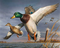 Paint By Numbers - Incoming Mallards