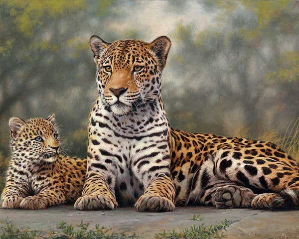 Paint By Numbers - Leopards Gaze