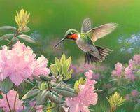 Paint By Numbers - Hummingbird