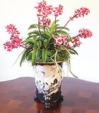 Artistic ceramic original designs for Asian orchids