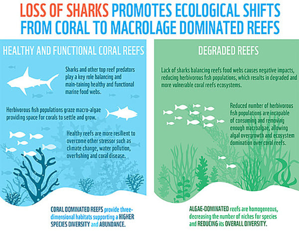 sharks and coral reefs