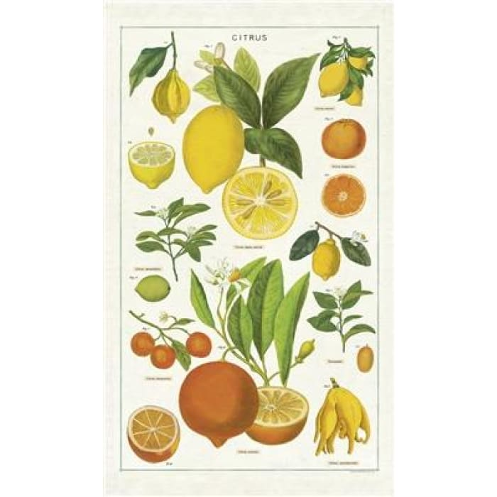 Tea Towels | Citrus Tea Towel | Cavallini | $12.00