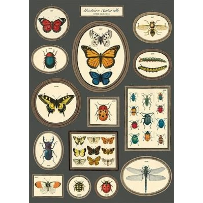 Wraps & Posters | Natural History Butterflies and Insects | cavallini | $6.00