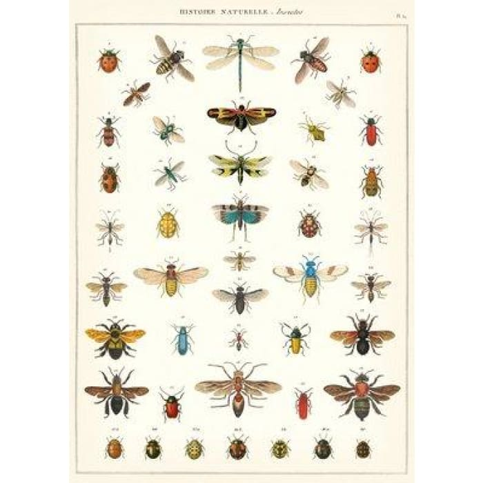 Wraps & Posters | Natural History Insects | cavallini | $6.00