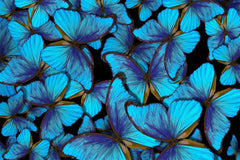 Blue Metamorphosis Mural Peel and Stick Wallpaper