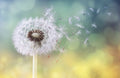 Colorful Dandelion Mural Peel and Stick Wallpaper
