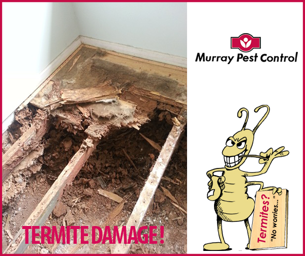 Free Termite Risk Asssesment Booking