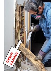 Visual Termite Inspection & Report