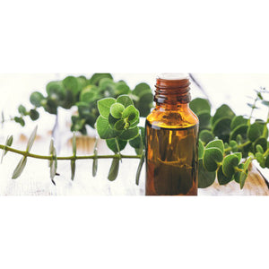 About Eucalyptus Blue Mallee Organic Essential Oil