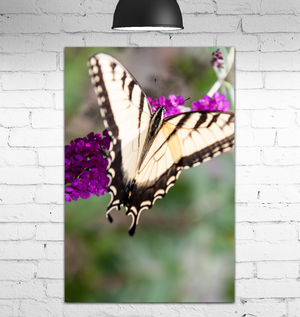 Canvas Wrap - The Butterfly