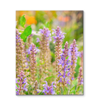 Canvas Wrap - Spring Flowers