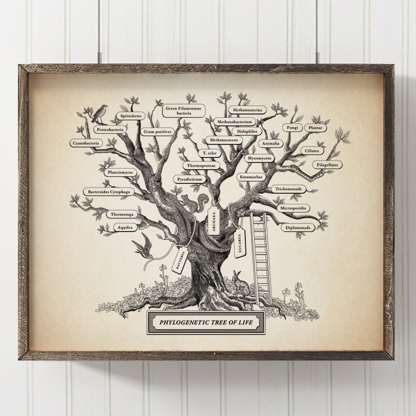 Microbiology Phylogenetic Tree Of Life Print (Aurum)