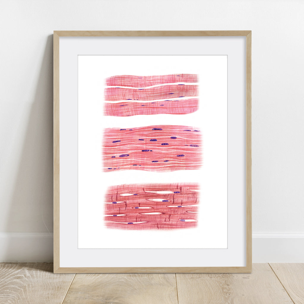 Muscle Cells Watercolor Art Print