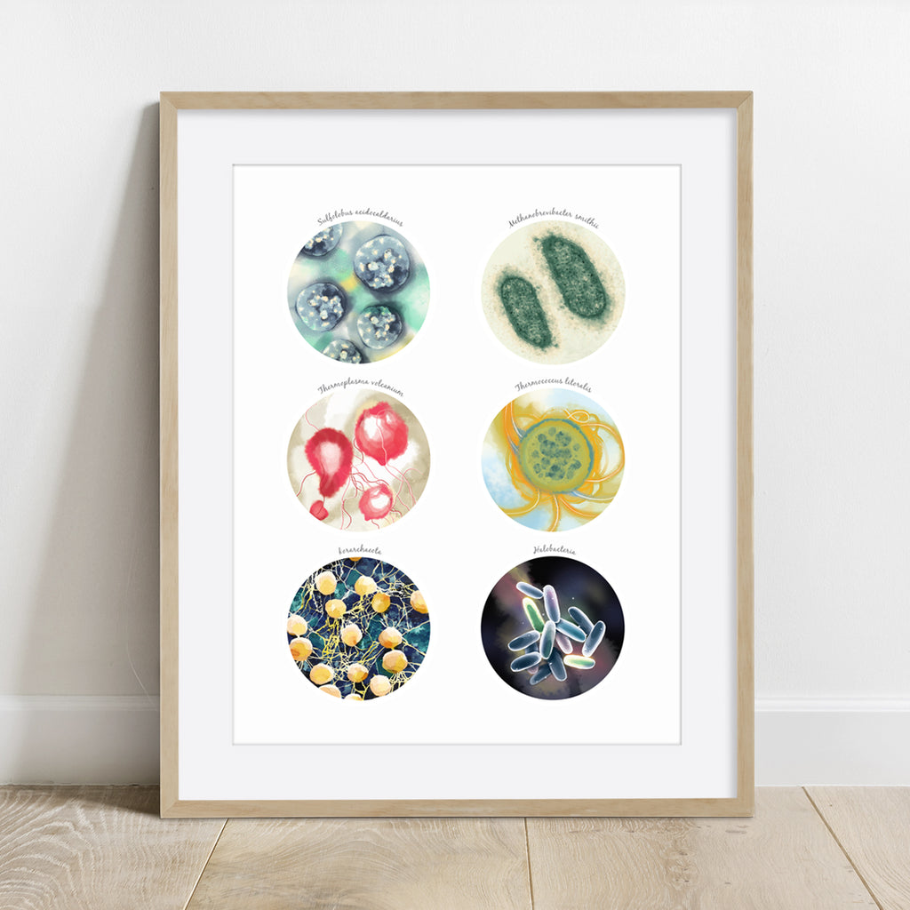 Ancient Bacteria, Archaea Collection Print