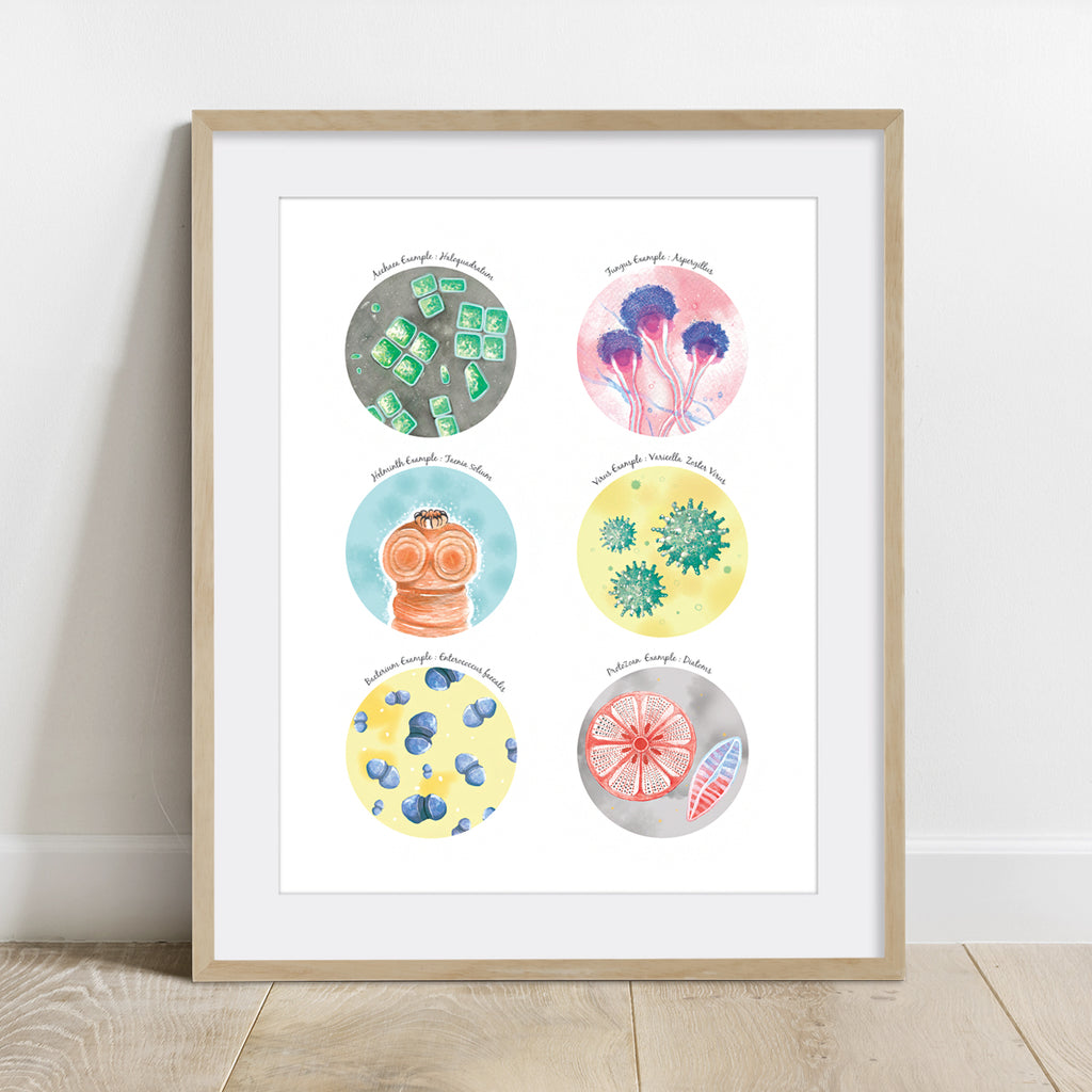Six Types of Microorganisms Examples Collection Print