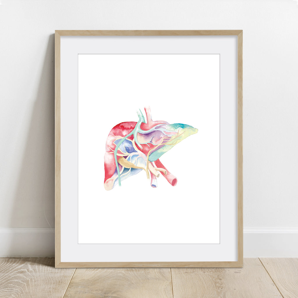 Liver Watercolor Print