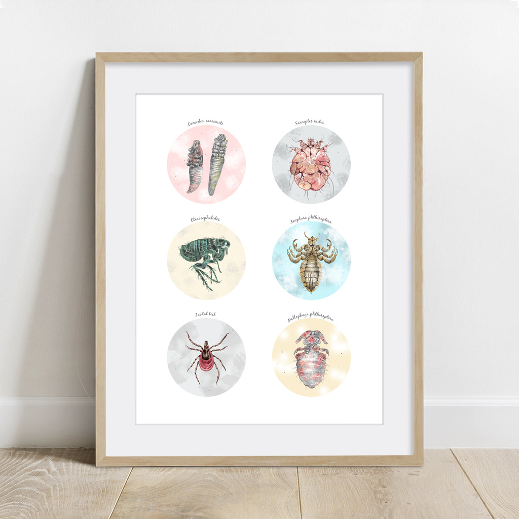 Canine External Parasites Collection Print
